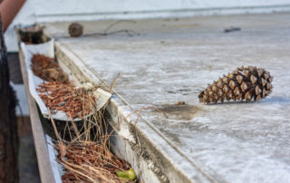 Why Keeping Your Gutters Clear is So Important Near Lexington, Kentucky (KY) to Avoid Water Damage