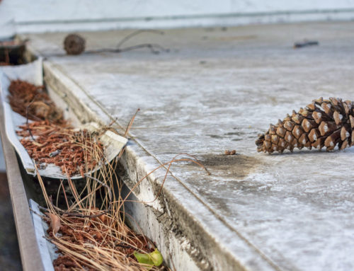 Why Keeping Your Gutters Clear is So Important Near Lexington, KY