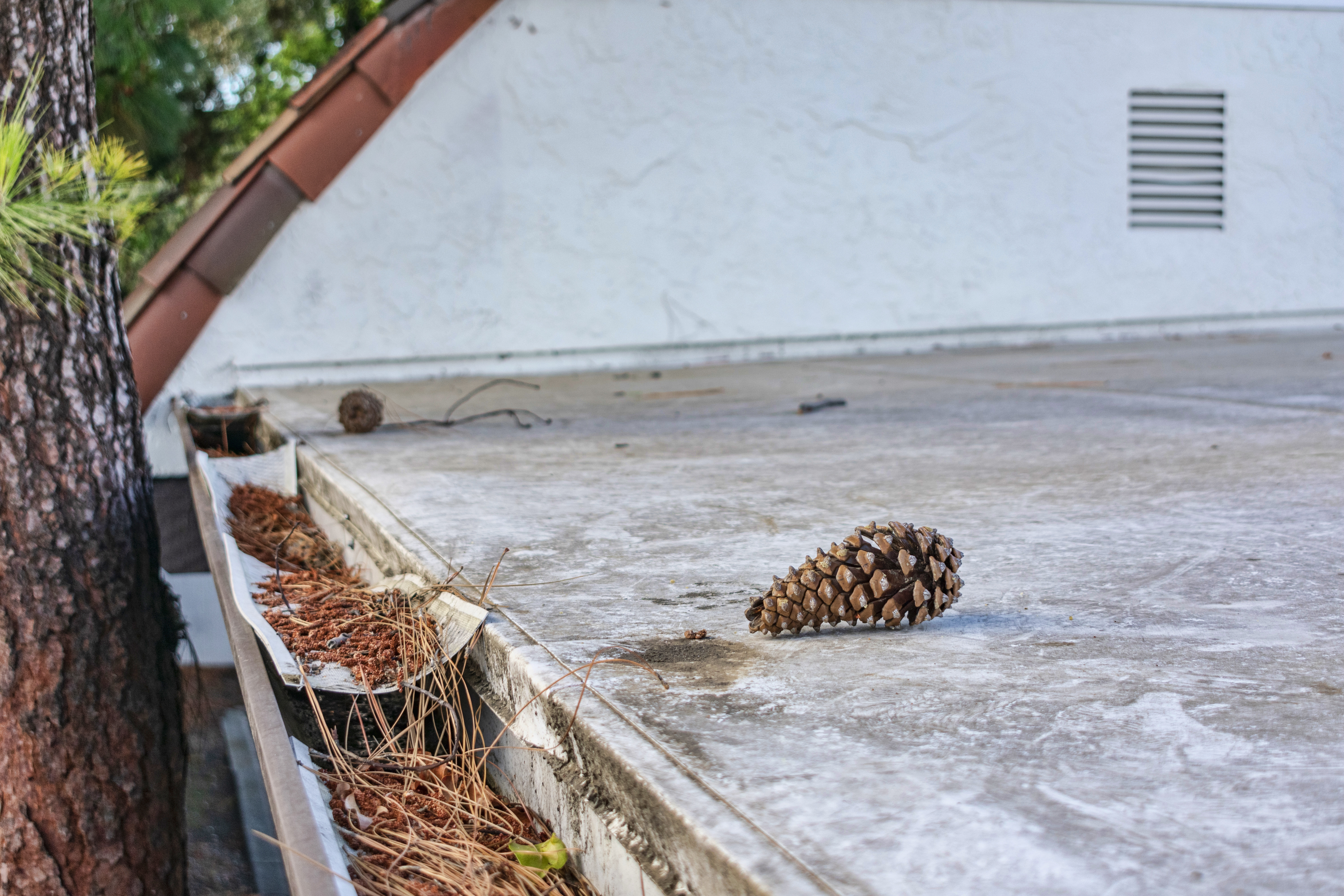 Roof Gutter Clogged With Leaves Pine Needles And Debris